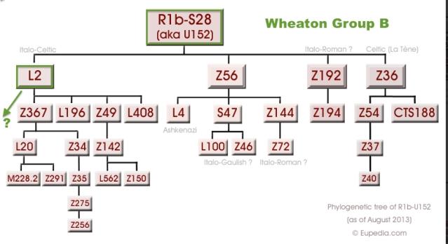 WHEATON Group B Phylogenic Tree